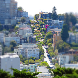 crazy crooked by Amy McCarty - City,  Street & Park  Neighborhoods ( lombardo street, crooked streets )