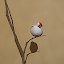 Game Wappoi Room Escape APK for Windows Phone