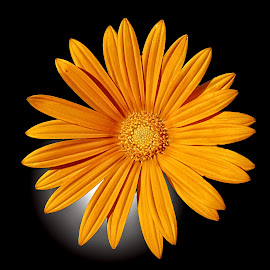 MGI flower 11 by Michael Moore - Flowers Single Flower (  )
