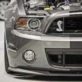 Shelby Cobra by Tony Bendele - Transportation Automobiles ( car, shelby, cobra )