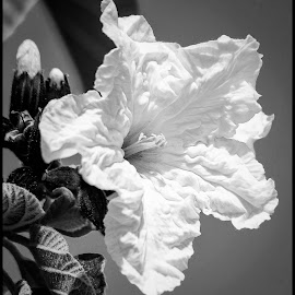 Tree Flower by Dave Lipchen - Black & White Flowers & Plants ( tree flower )