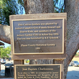 This Cedrus deodara was planted by Auburn Campfire Girls Pamela Stewart and Sharon Klein, end members cf the Auburn Garden Club on Arbor Day 1959. The tree was furnished by A.V. Schenek. Placer ...