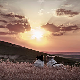 Dogs resting by Ghimpe Cristian - Animals - Dogs Portraits