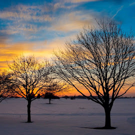 Wintry Sunset by Tracy Gruver - Novices Only Landscapes ( sunset, trees,  )