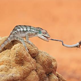 got u by Shikhei Goh II - Animals Reptiles