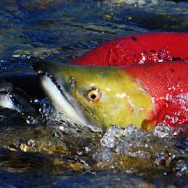 by Don Mann - Animals Fish