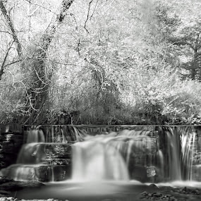 Natural Dam in Infrared by Charles Grubbs - Landscapes Waterscapes ( water, nature, infrared, waterfall, arkansas )