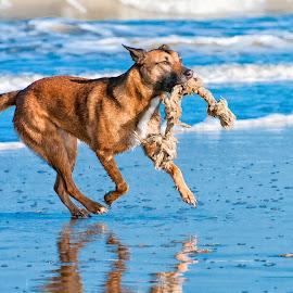 by Myla Muis - Animals - Dogs Running