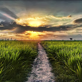 Sunset Sore Ini by Randi Pratama M - Instagram & Mobile Android ( field, hdr, sunset, indonesia, huawei )