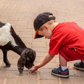 Feeding the animals by Jeff McVoy - Babies & Children Children Candids ( farm, red, goat, feeding, cute, toddler, boy )