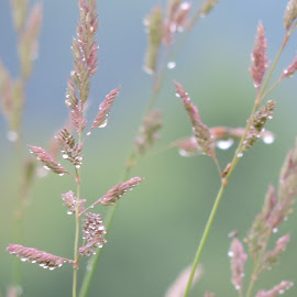 Rainy Day by Ginger Stegeman - Nature Up Close Leaves & Grasses