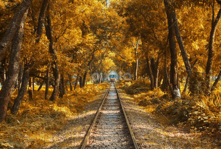 The Train by Topu Saha - Transportation Railway Tracks ( mymensingh, railroad, city, rail, tree, trees, rail road, street, bau, rail line, topu saha, garden, bangladesh agricultural university, autumn, railway, bangladesh, park, train,  )