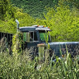 by Joseph Vittek - Transportation Automobiles ( truck, vines, blue, peterbuild, vehicle, weeds )
