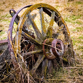 Lichen Covered Wagon Wheel by Dave Lipchen - Artistic Objects Other Objects ( wagon wheel )