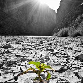 Survival by Launa Bodde - Landscapes Deserts
