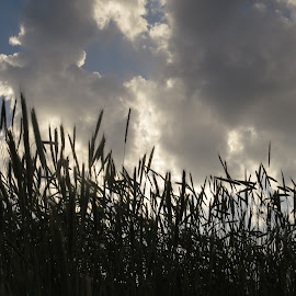 by Loreen Parkerson - Nature Up Close Leaves & Grasses