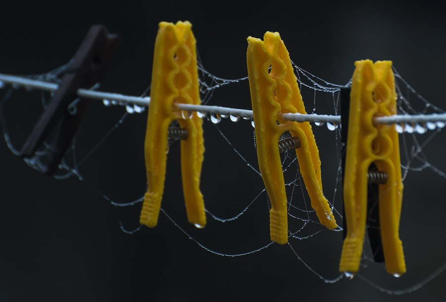Pegs and webs by Doug Faraday-Reeves - Artistic Objects Other Objects ( plastics, web, yellow, pegs, rain )