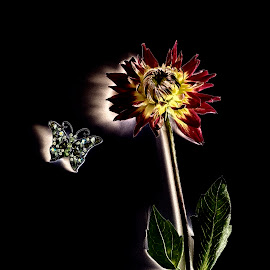 Butterfly Sees Flower by LINDA HALLAUER - Digital Art Things