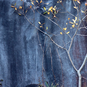 industrial impressionism by Michael Croghan - Abstract Fine Art ( tree, slate, stone, grey, leaf )