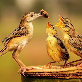Feed Delivery  by MazLoy Husada - Animals Birds