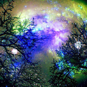 Stars Through The Trees http://society6.com/product/stars-through-the-trees_print#1=45 by ChrisTina Shaskus - Digital Art Things