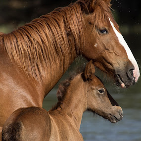 Mother's Love by Dave . - Animals Horses ( mammals, wild, animals, horses, arizona,  )