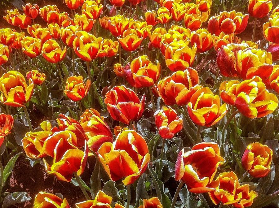 by Scott Jones - Flowers Flowers in the Wild