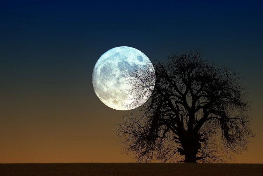 moon Rise by Steve Adams - Abstract Fine Art ( moon rise, full moon rising, super moon, old tree, full moon, supermoon )