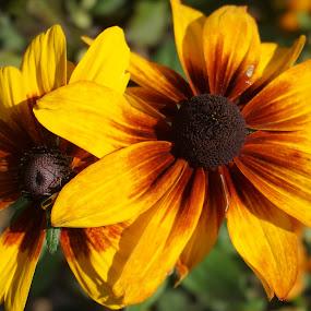 by Kathy Kehl - Flowers Flower Buds ( orange, yellow, flowers, black, flower )