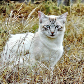 by Larissa Riley - Animals - Cats Portraits ( cat, beautiful, white, bush, blue eyes )