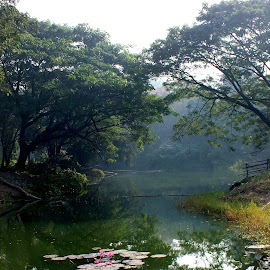 Soothing greenery by Mainak Adak - Landscapes Forests ( relax, tranquil, relaxing, tranquility )