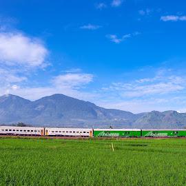 Malabar Train by Husni Mubarok - Transportation Trains ( railroad tracks, railroad, train, transportation, landscape )