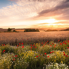 Gloucestershire Summer Sunset by Freddie Ardley - Landscapes Prairies, Meadows & Fields ( field, gloucestershire, sunset, art, beauty, travel, landscape, flower )