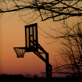 sunrise basketball by Ashleigh Brown - Sports & Fitness Basketball ( basketball, tree, silhoutte, sunrise,  )