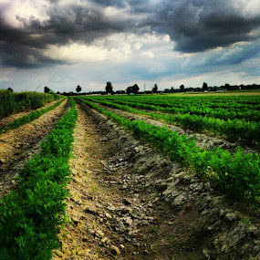 One of many Fields in Bayern by Raphi ^^ - Instagram & Mobile Instagram