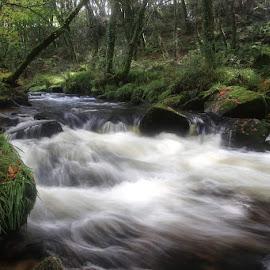Golitha Falls by Nick Bonwick - Landscapes Waterscapes ( waterfalls, waterfall, woods )