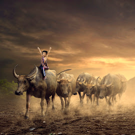 Shaped  by Muhamad Lazim - Digital Art Animals ( #dramatic #buffalo #children #goldenhours #sunset )