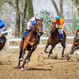 Into the Home Strecth by Bob Grandpre - Sports & Fitness Other Sports ( jockeys, four horses, fort pierre, horse, horse races, racing track )