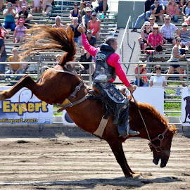 still on by Jean-Pierre Machet - Sports & Fitness Rodeo/Bull Riding ( animal, competition, rodeo, horse riding, sport )