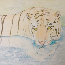 Tiger by Anika McFarland - Drawing All Drawing ( wild animal, colored pencil, tiger drawing, tiger, pencil drawing, animal )