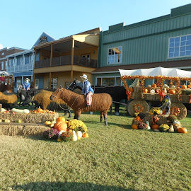 Beautiful fall decorations by David Jarrard - Public Holidays Thanksgiving ( mountain decorations thnaksgiving, fall, decorations, halloween )