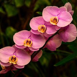 by Stanley P. - Flowers Flower Gardens