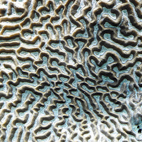 by Anthony Hutchinson - Nature Up Close Other Natural Objects (  )