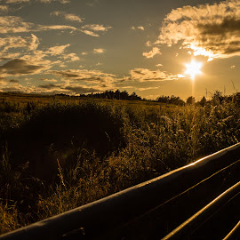 Seeing the Day Off by Marc Steele - Landscapes Sunsets & Sunrises ( clouds, uk, grass, sun, rural, country, gate, field, england, sky, sunset, nottinghamshire, summer, bestwood country park, evening, nottingham )