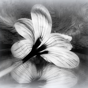 Reflecting... by Michelle Dimascio - Black & White Flowers & Plants ( reflection, nature, plants, flowers )