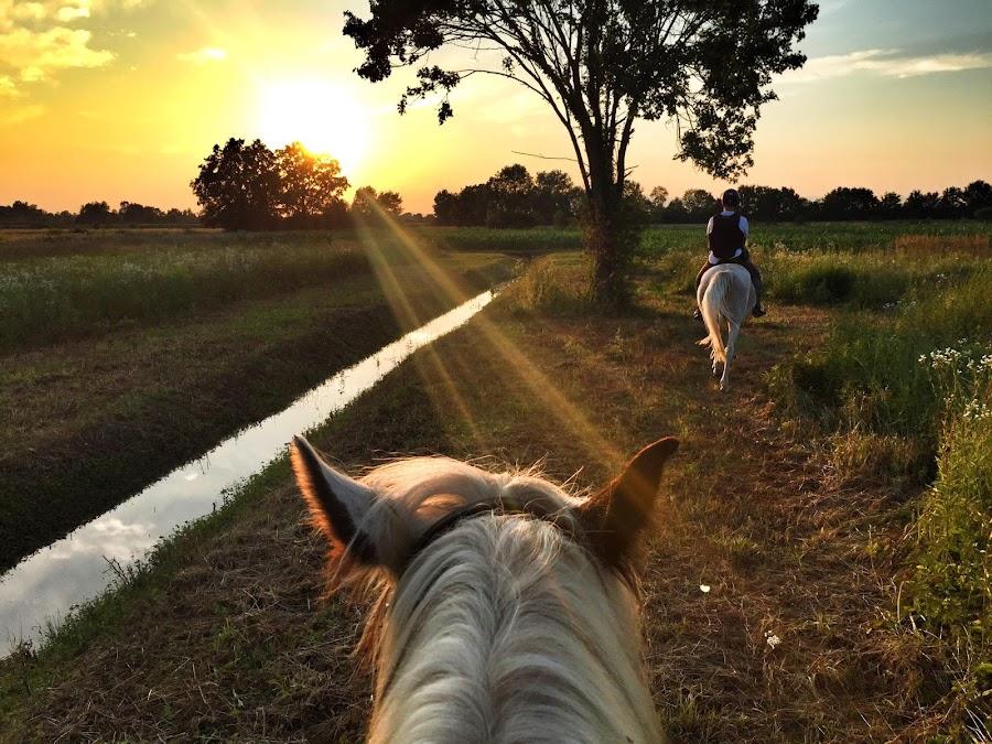 by Ivana Tilosanec - Instagram & Mobile iPhone ( hrvatska, nature, sunsets, people, croatia, sunlight, golden hour, sunset, natureza, animals, horse riding, landscape, nature photography, horses,  )