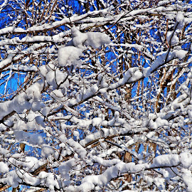 snow on branches by Sharon Leora Norris - Nature Up Close Trees & Bushes