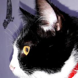Poupoune by Mickael Lambert - Animals - Cats Portraits ( cat,  )