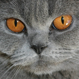 by Elke Krone - Animals - Cats Portraits