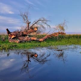 Reflaction by Tomasz Budziak - Landscapes Waterscapes ( reflection, waterscape, landscape )